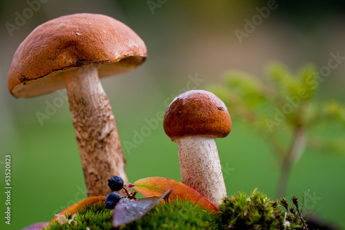 Wall Mural - Mushrooms in the moss