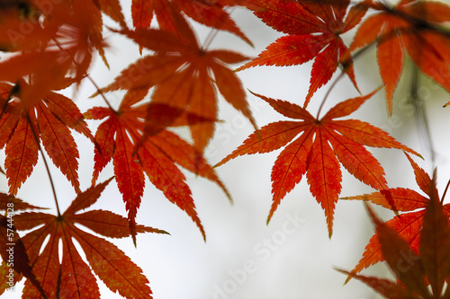 Wall Mural - Autumn leaves
