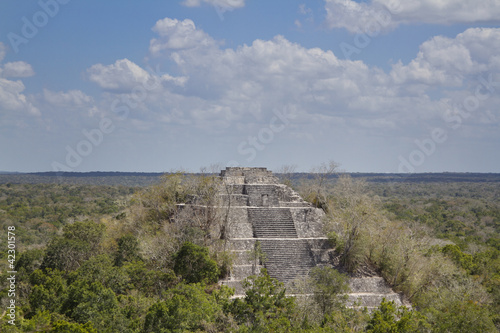 Wall Mural - mayan ruins at calakmul, mexico