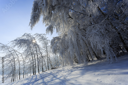 Wall Mural - Winter trees in Beskid mountains, Poland